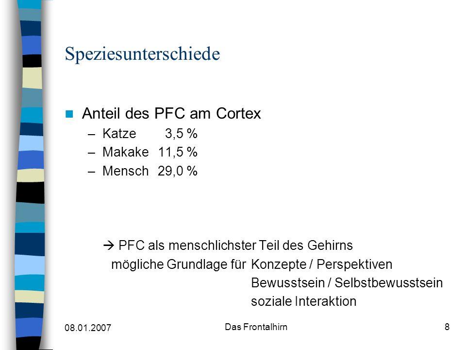 Speziesunterschiede Anteil des PFC am Cortex Katze 3,5 % Makake 11,5 %