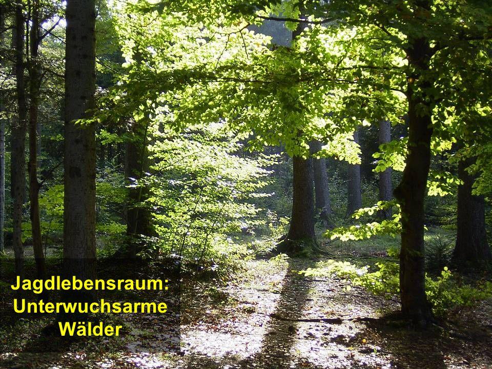 Jagdlebensraum: Unterwuchsarme Wälder