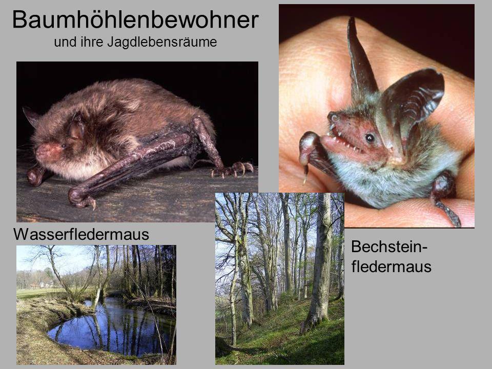 Baumhöhlenbewohner und ihre Jagdlebensräume