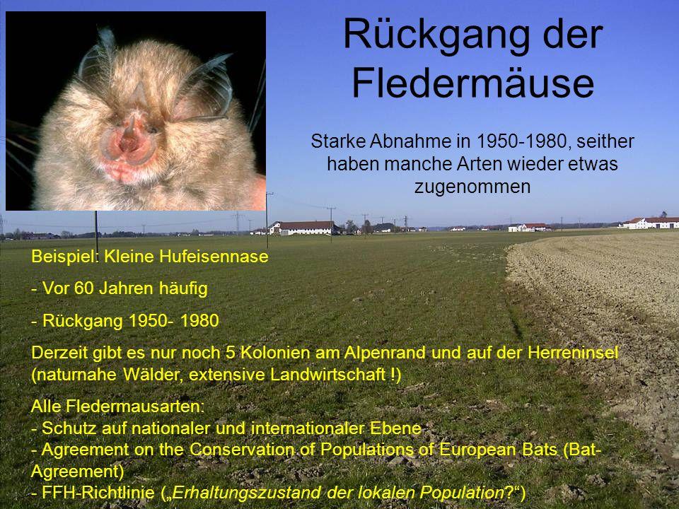 Rückgang der Fledermäuse Starke Abnahme in 1950-1980, seither haben manche Arten wieder etwas zugenommen