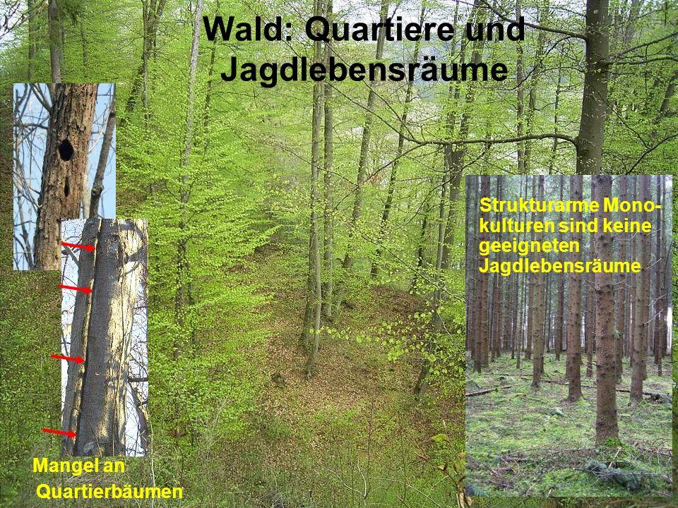 Wald: Quartiere und Jagdlebensräume