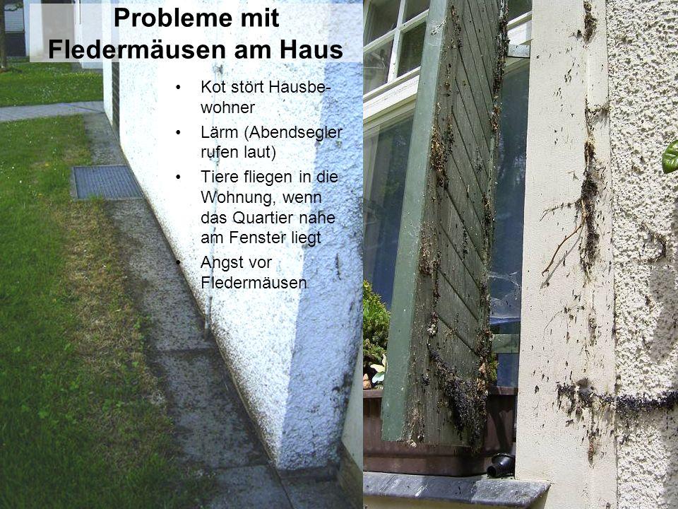Probleme mit Fledermäusen am Haus