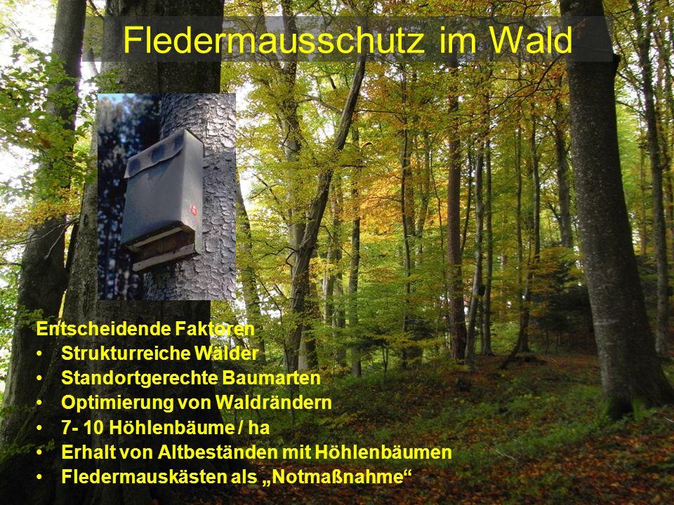 Fledermausschutz im Wald