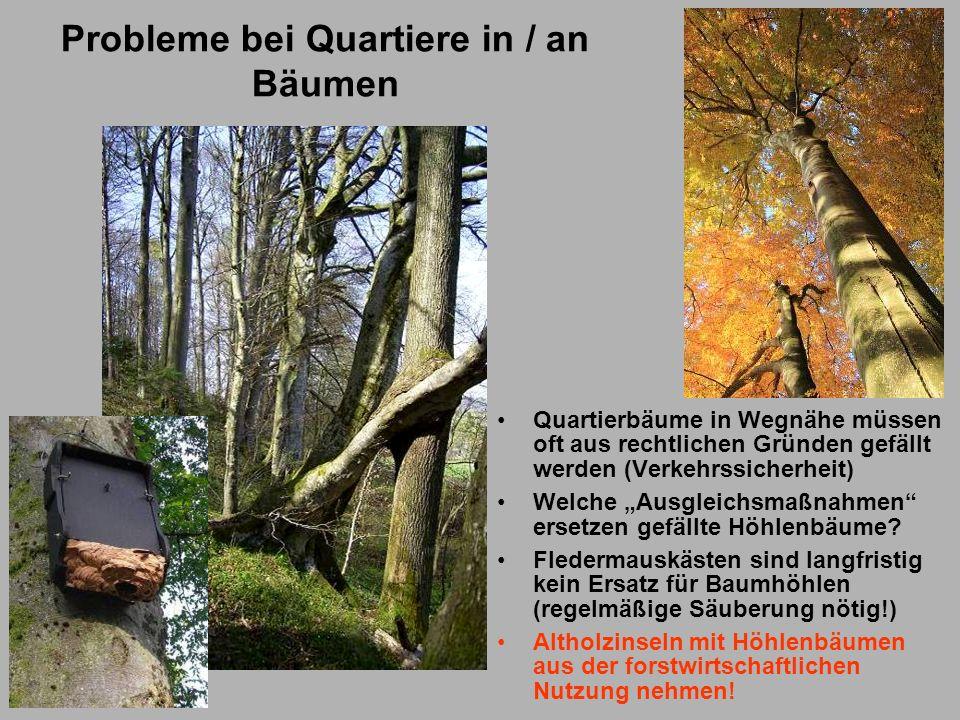 Probleme bei Quartiere in / an Bäumen