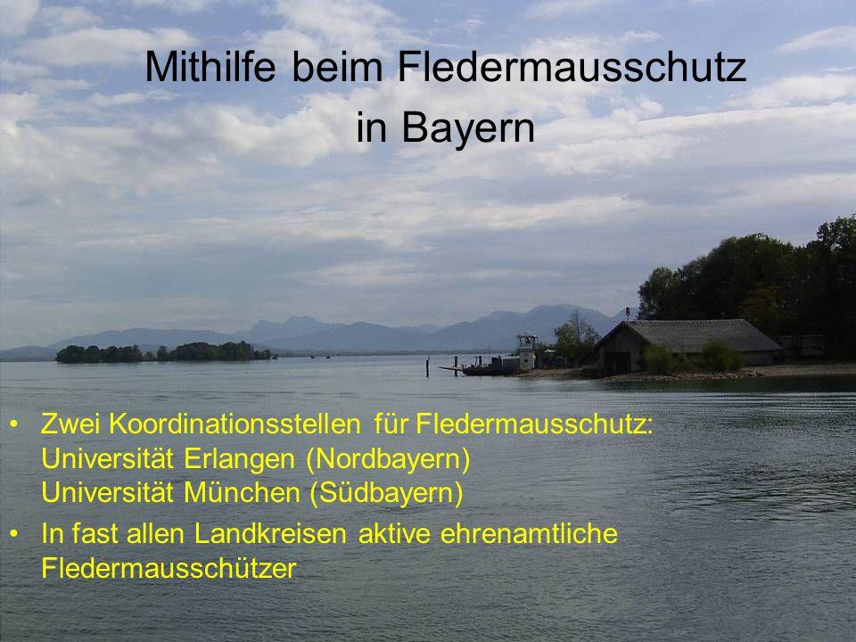 Mithilfe beim Fledermausschutz in Bayern