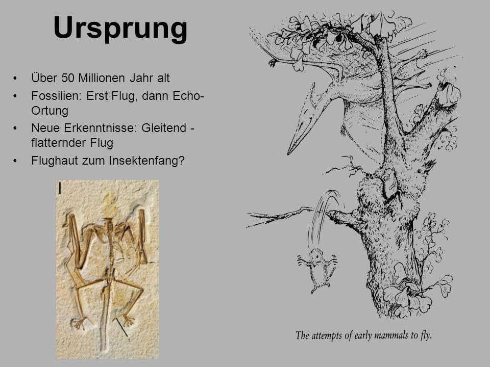 Ursprung Über 50 Millionen Jahr alt