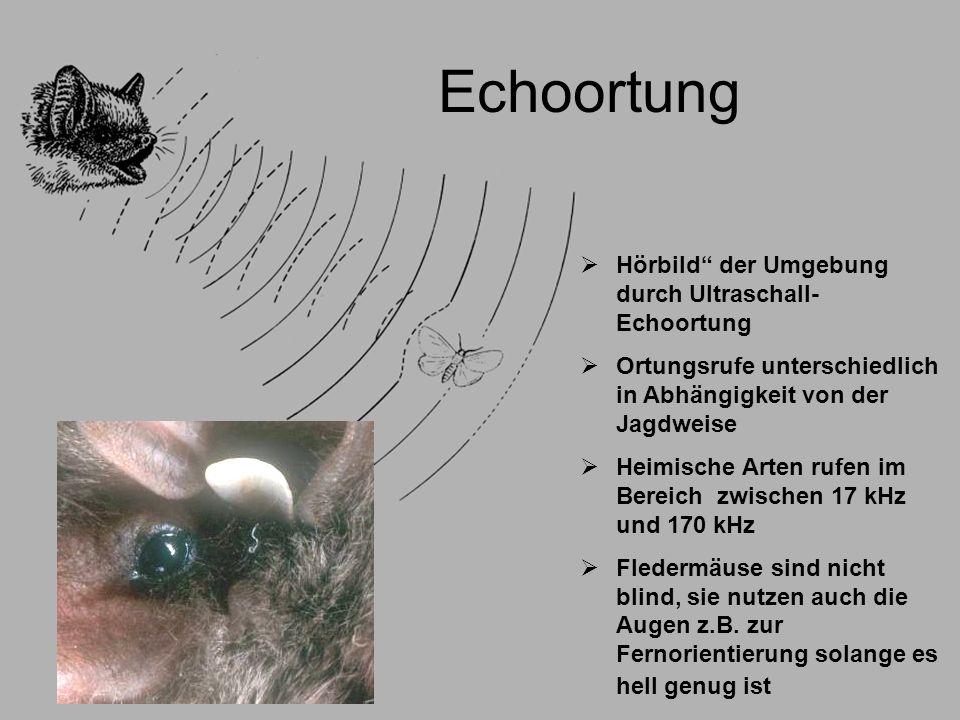 Echoortung Hörbild der Umgebung durch Ultraschall-Echoortung