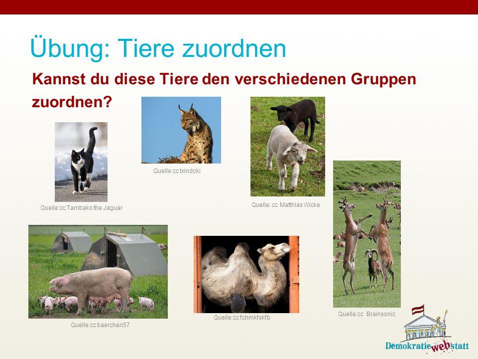 Übung: Tiere zuordnen Kannst du diese Tiere den verschiedenen Gruppen