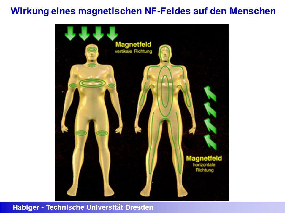 Wirkung eines magnetischen NF-Feldes auf den Menschen
