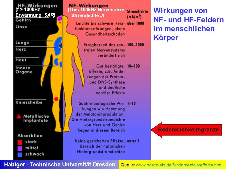 Wirkungen von NF- und HF-Feldern im menschlichen Körper