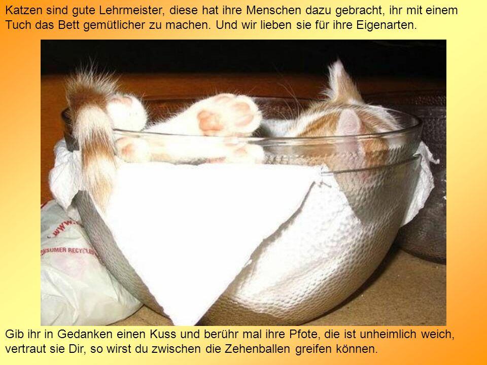 Katzen sind gute Lehrmeister, diese hat ihre Menschen dazu gebracht, ihr mit einem Tuch das Bett gemütlicher zu machen. Und wir lieben sie für ihre Eigenarten.