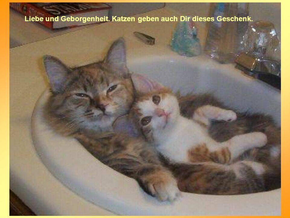 Liebe und Geborgenheit. Katzen geben auch Dir dieses Geschenk.