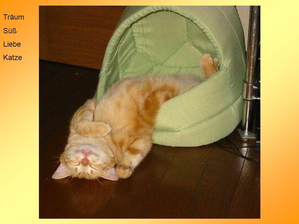 Träum Süß Liebe Katze