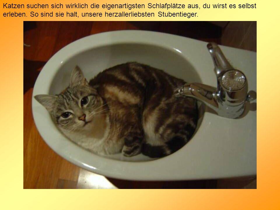 Katzen suchen sich wirklich die eigenartigsten Schlafplätze aus, du wirst es selbst erleben.