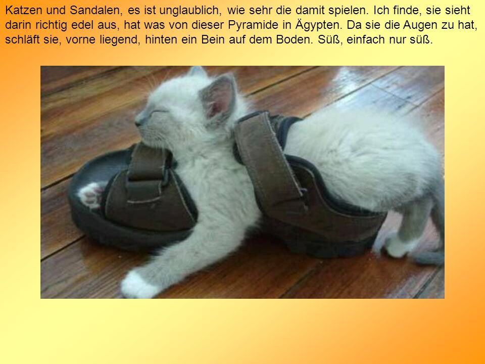 Katzen und Sandalen, es ist unglaublich, wie sehr die damit spielen