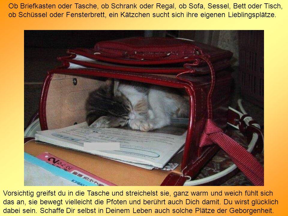 Ob Briefkasten oder Tasche, ob Schrank oder Regal, ob Sofa, Sessel, Bett oder Tisch, ob Schüssel oder Fensterbrett, ein Kätzchen sucht sich ihre eigenen Lieblingsplätze.