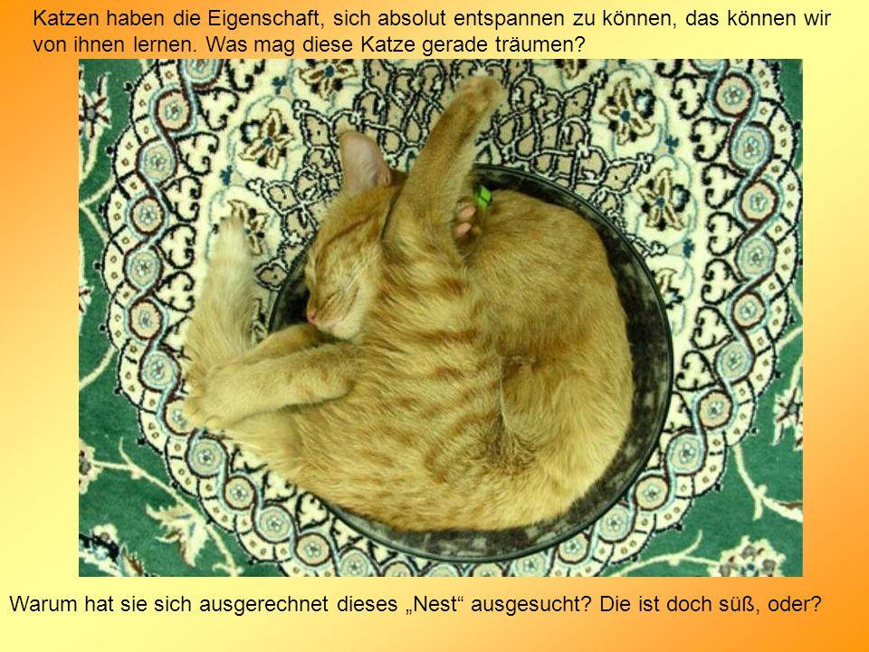 Katzen haben die Eigenschaft, sich absolut entspannen zu können, das können wir von ihnen lernen. Was mag diese Katze gerade träumen