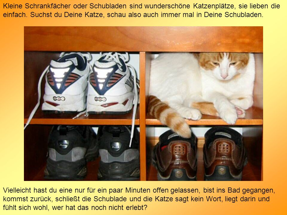 Kleine Schrankfächer oder Schubladen sind wunderschöne Katzenplätze, sie lieben die einfach. Suchst du Deine Katze, schau also auch immer mal in Deine Schubladen.