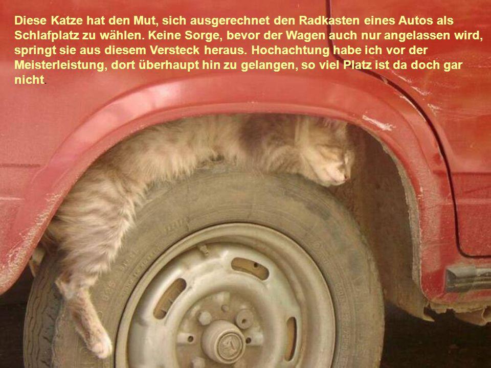 Diese Katze hat den Mut, sich ausgerechnet den Radkasten eines Autos als Schlafplatz zu wählen.