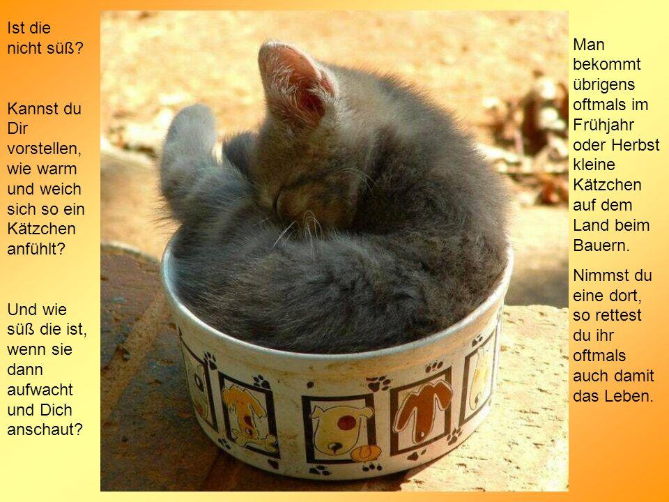 Man bekommt übrigens oftmals im Frühjahr oder Herbst kleine Kätzchen auf dem Land beim Bauern.