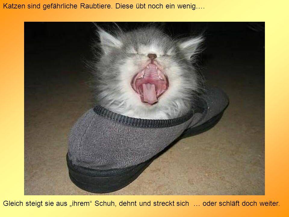 Katzen sind gefährliche Raubtiere. Diese übt noch ein wenig….