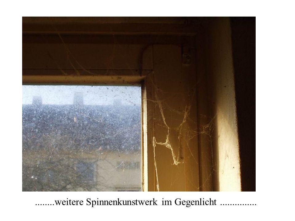 ........weitere Spinnenkunstwerk im Gegenlicht ...............