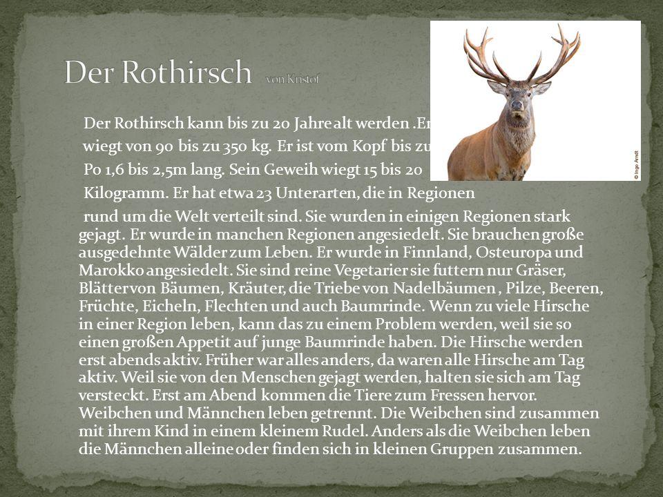 Der Rothirsch von Kristof