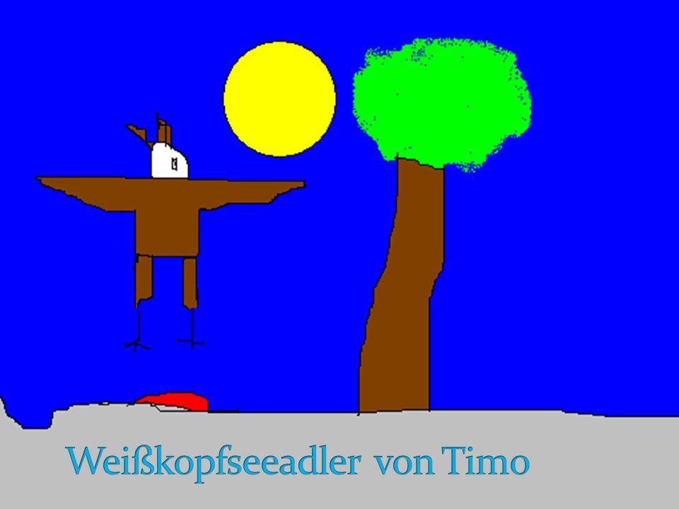 Weißkopfseeadler von Timo