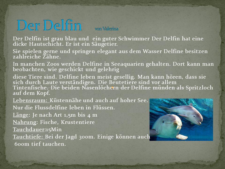 Der Delfin von Valerina