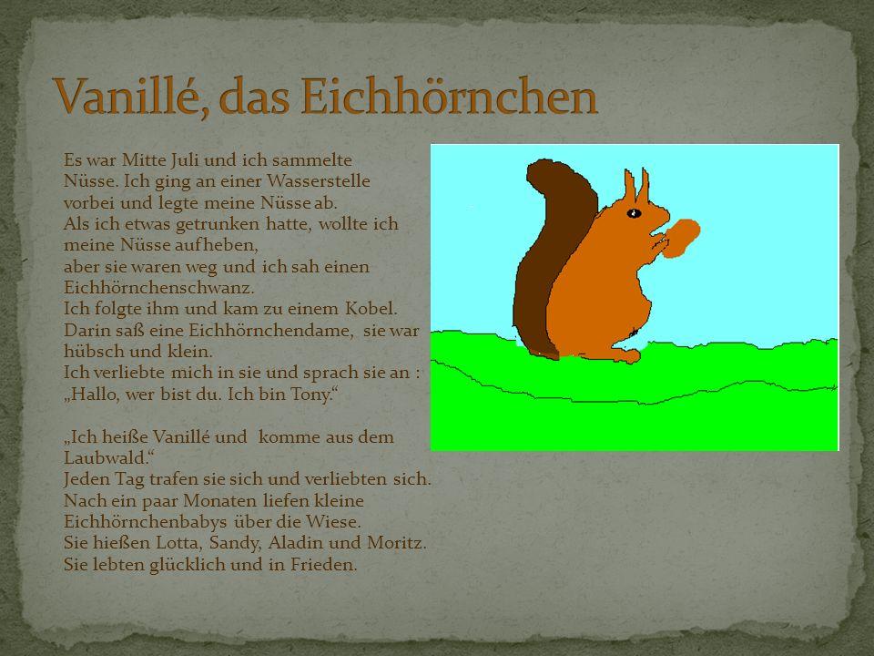 Vanillé, das Eichhörnchen