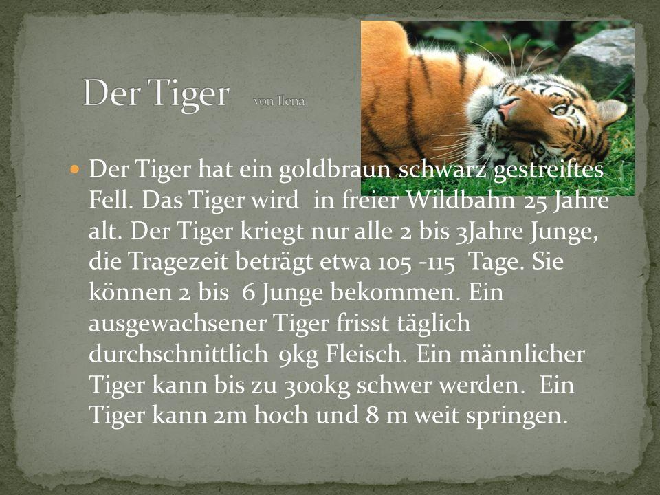 Der Tiger von Ilena