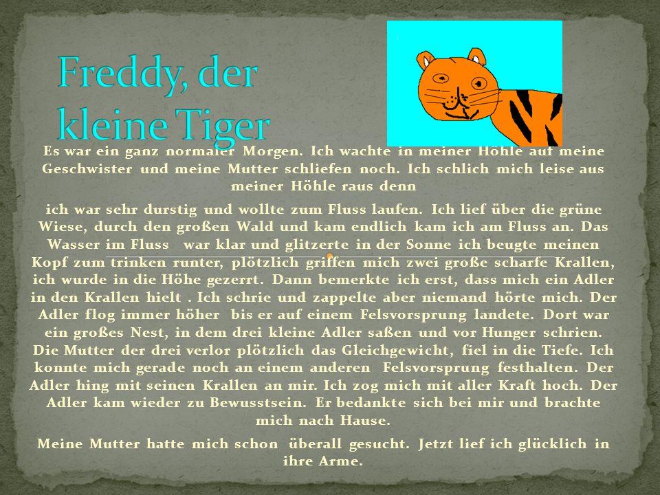 Freddy, der kleine Tiger