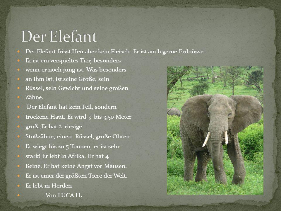 Der Elefant Der Elefant frisst Heu aber kein Fleisch. Er ist auch gerne Erdnüsse. Er ist ein verspieltes Tier, besonders.