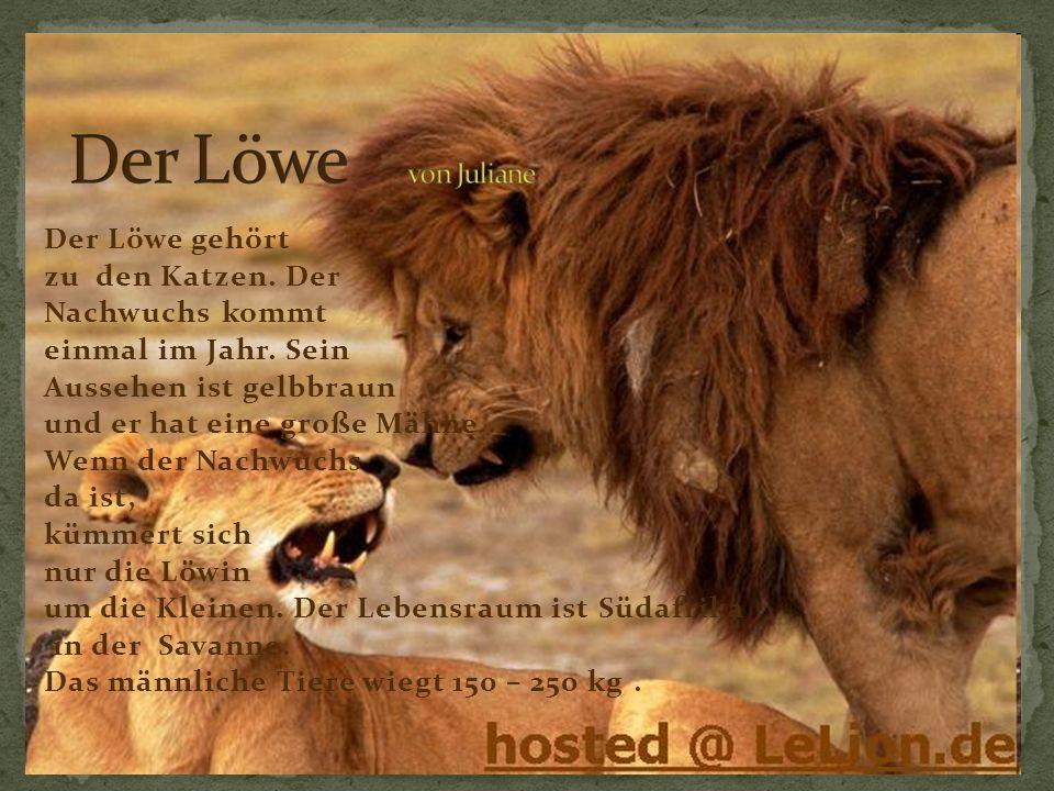 Der Löwe von Juliane Der Löwe gehört zu den Katzen. Der
