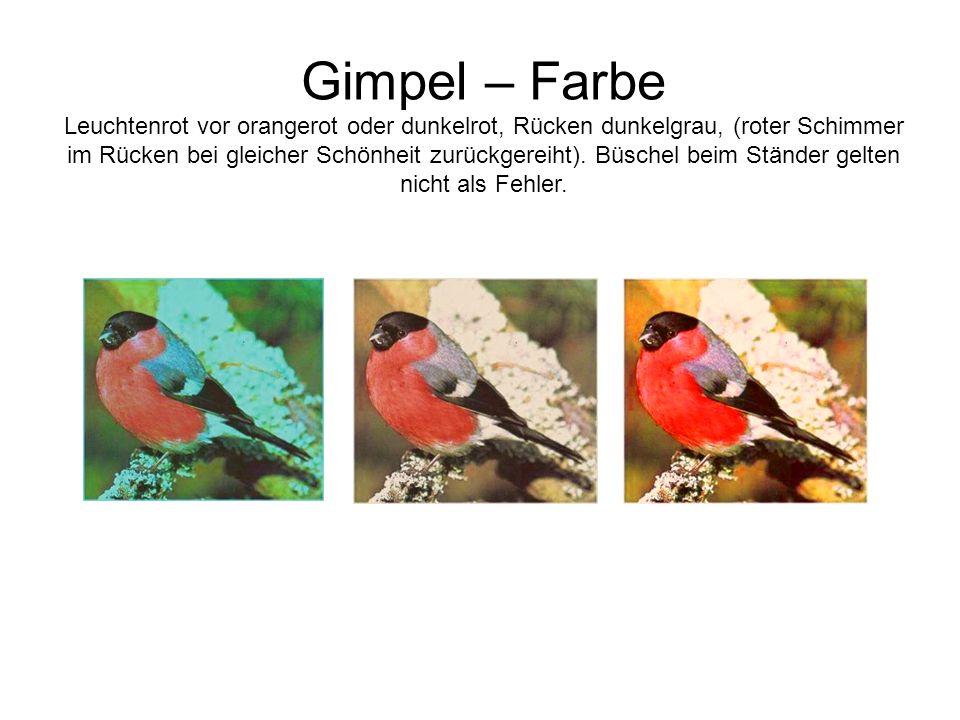 Gimpel – Farbe Leuchtenrot vor orangerot oder dunkelrot, Rücken dunkelgrau, (roter Schimmer im Rücken bei gleicher Schönheit zurückgereiht).