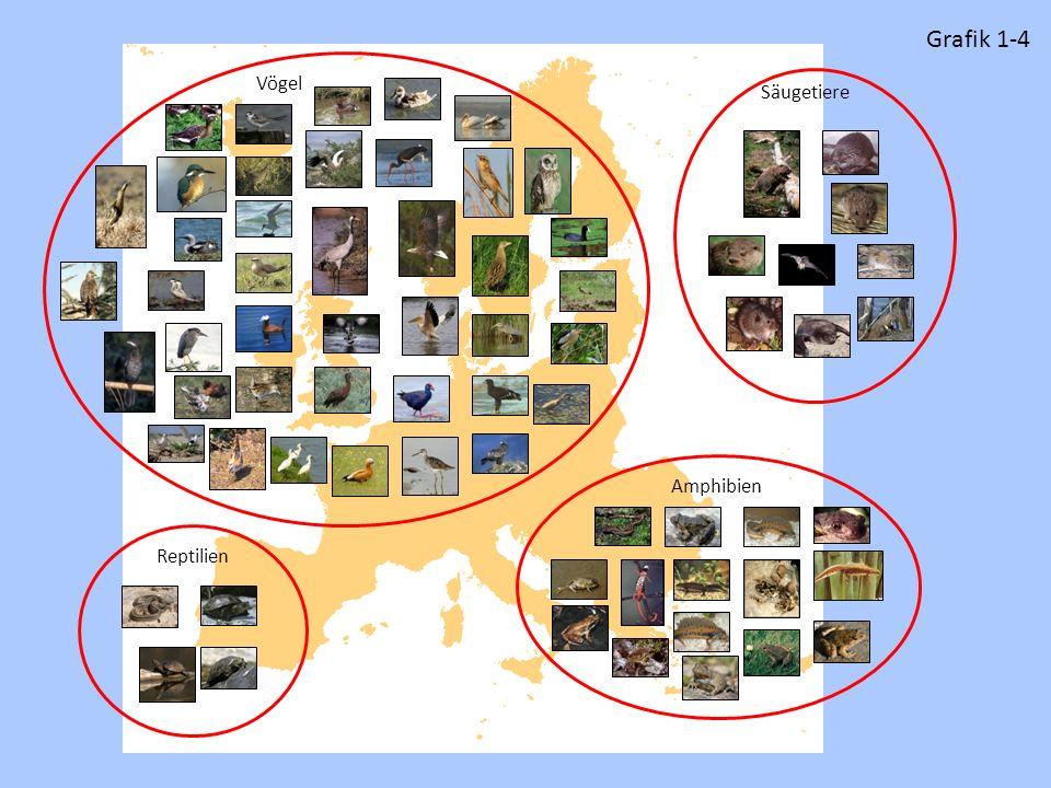 Grafik 1-4 Vögel Säugetiere Amphibien Reptilien