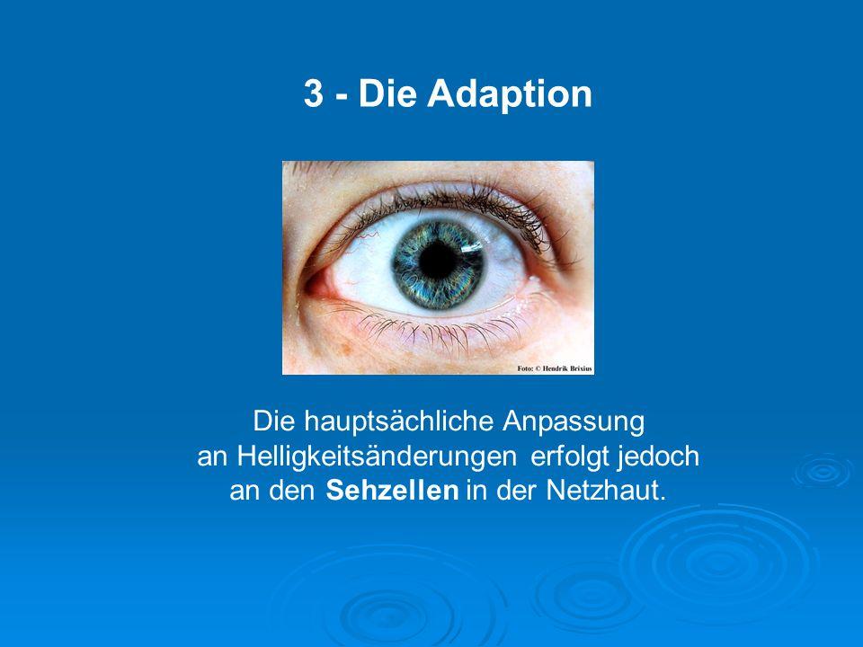 3 - Die Adaption Die hauptsächliche Anpassung an Helligkeitsänderungen erfolgt jedoch an den Sehzellen in der Netzhaut.