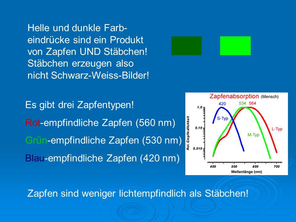 Helle und dunkle Farb-eindrücke sind ein Produkt von Zapfen UND Stäbchen! Stäbchen erzeugen also nicht Schwarz-Weiss-Bilder!