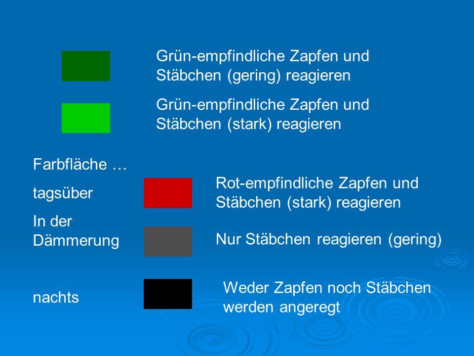Grün-empfindliche Zapfen und Stäbchen (gering) reagieren