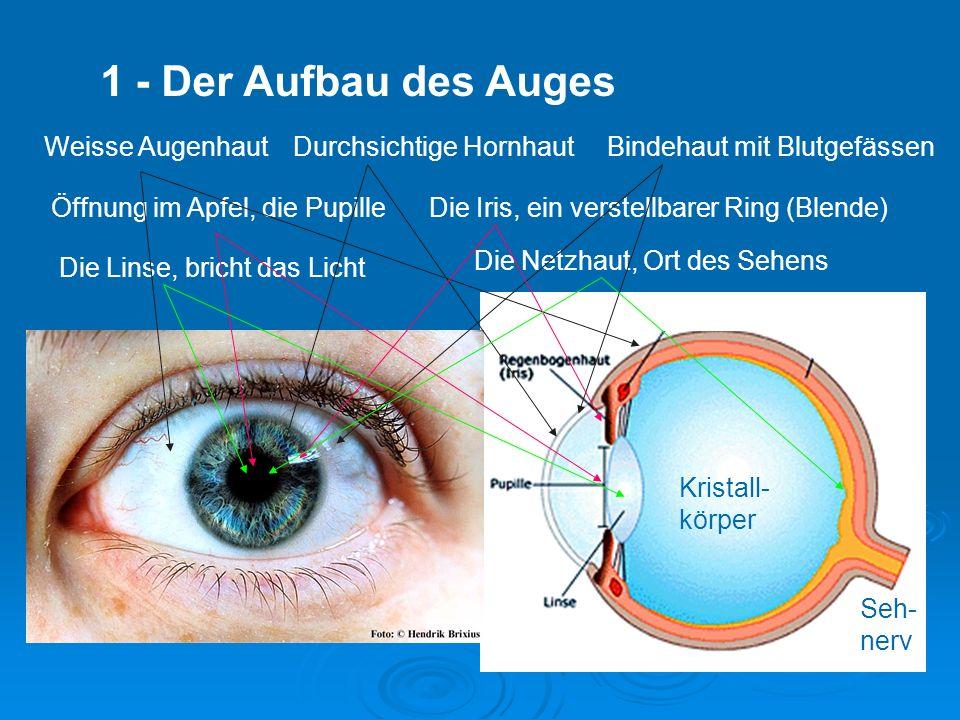 1 - Der Aufbau des Auges Weisse Augenhaut Durchsichtige Hornhaut
