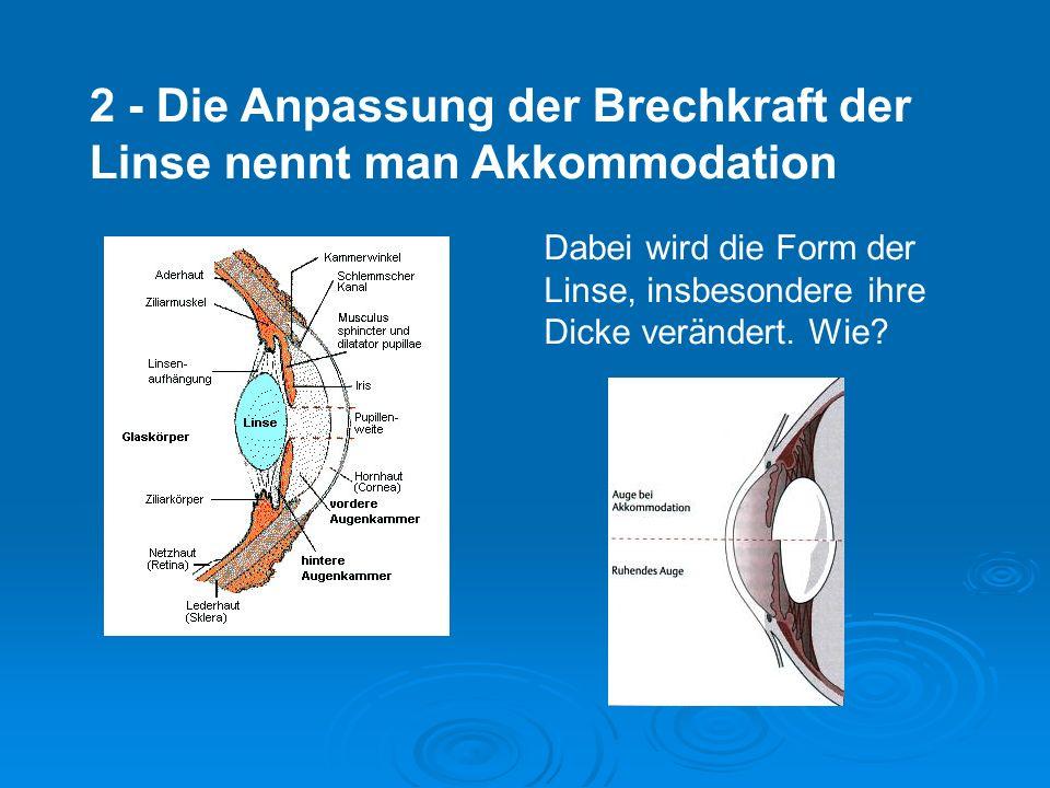 2 - Die Anpassung der Brechkraft der Linse nennt man Akkommodation