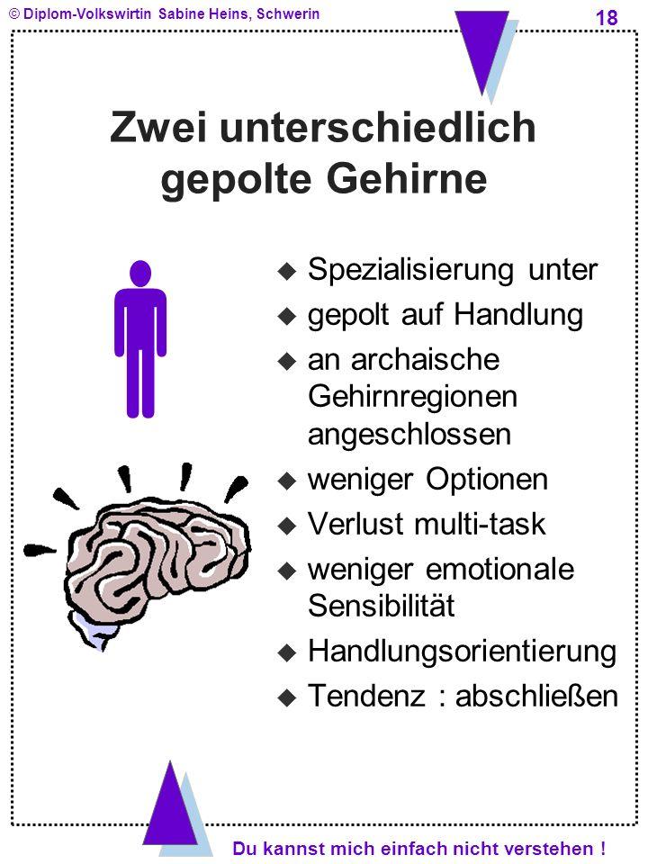 Zwei unterschiedlich gepolte Gehirne