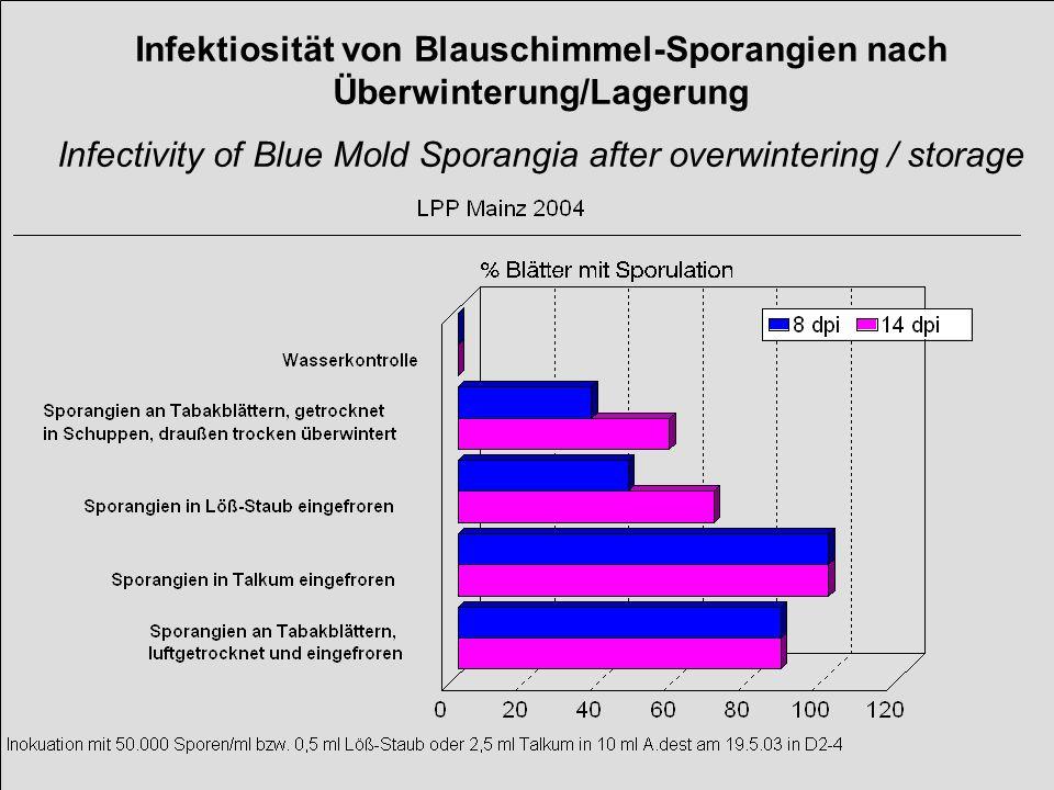 Infektiosität von Blauschimmel-Sporangien nach Überwinterung/Lagerung