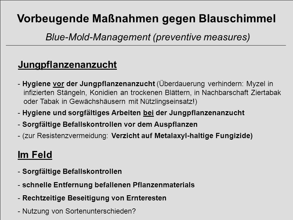Vorbeugende Maßnahmen gegen Blauschimmel