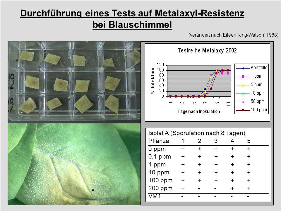 Durchführung eines Tests auf Metalaxyl-Resistenz