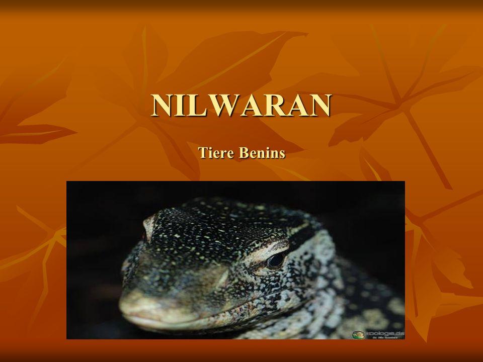 NILWARAN Tiere Benins