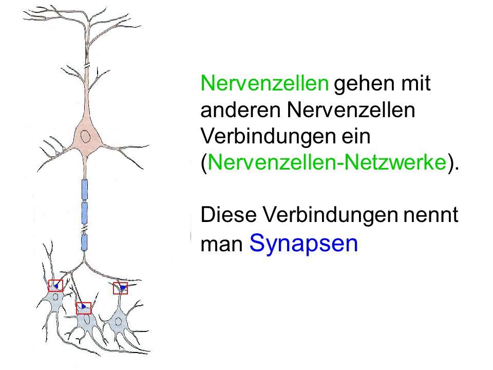 Nervenzellen gehen mit