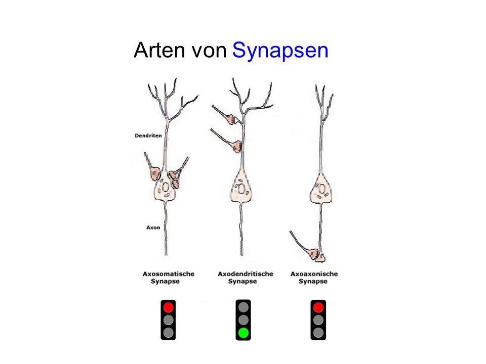 Arten von Synapsen