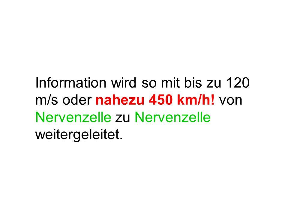 Information wird so mit bis zu 120 m/s oder nahezu 450 km/h