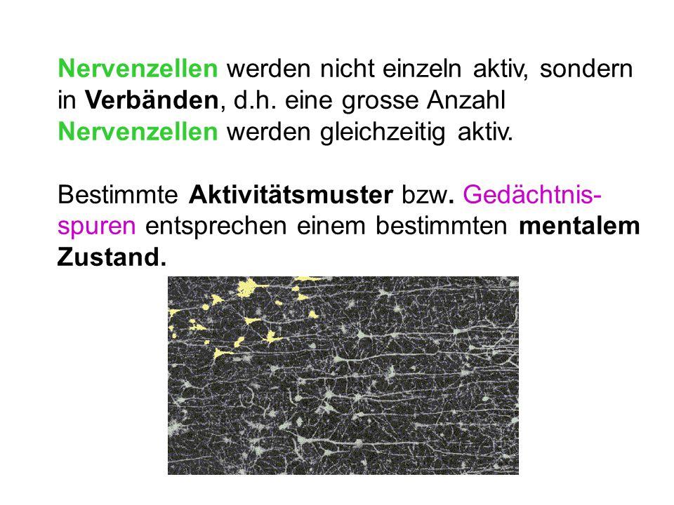 Nervenzellen werden nicht einzeln aktiv, sondern in Verbänden, d. h